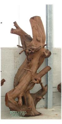 Tropical Wood