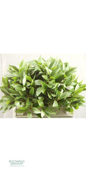 Artificial plant - laurel half