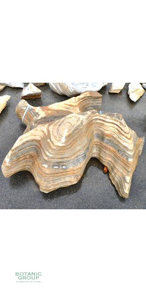 Amazona - Stone big