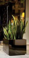 Planter - plastic EWS Basic Quadro