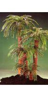Artificial - Cyca palm