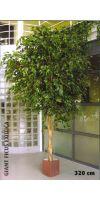 Artificial- Ficus benjamini giant