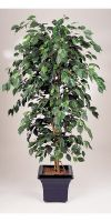 Kunstpflanze - Ficus exotica