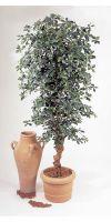 Artificial plant - Black Olive